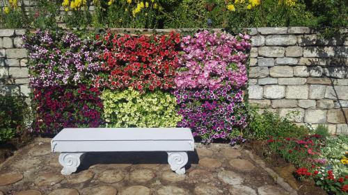 Petunia frame microgarden